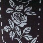 Farbe_white_fiore_narcisa